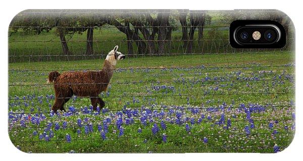 Llama In Bluebonnets IPhone Case