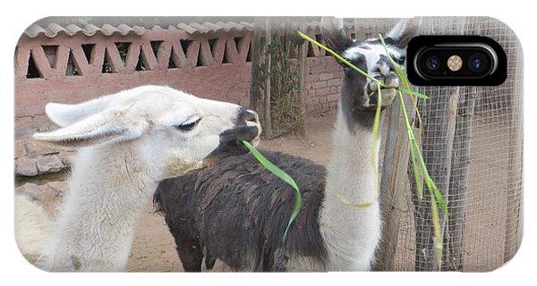 Llamas In Peru IPhone Case