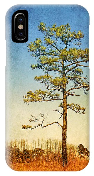 Loblolly Pine Along The Chesapeake IPhone Case
