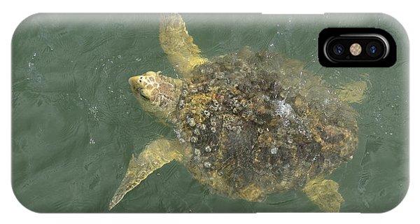 Loggerhead Sea Turtle IPhone Case
