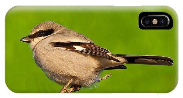 Loggerhead Shrike IPhone Case