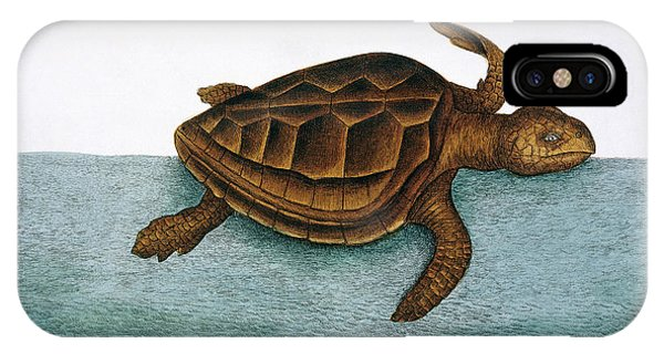 North London iPhone Case - Loggerhead Turtle by Natural History Museum, London