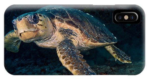 Loggerhead Turtle Under Ledge IPhone Case