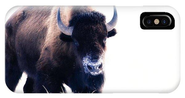 Lone Bull IPhone Case
