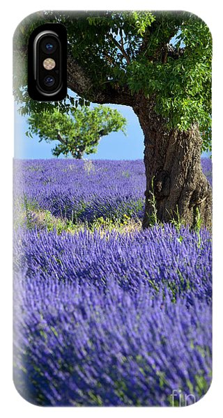 IPhone Case featuring the photograph Lone Tree In Lavender by Brian Jannsen