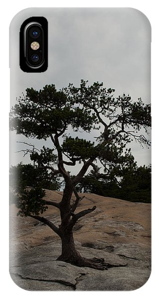 Lone Tree In Stone Mountain State Park North Carolina IPhone Case