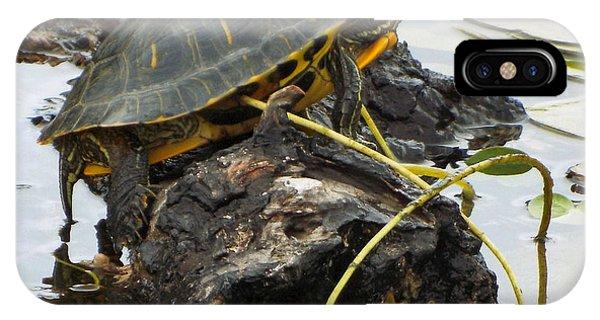 Lone Turtle IPhone Case