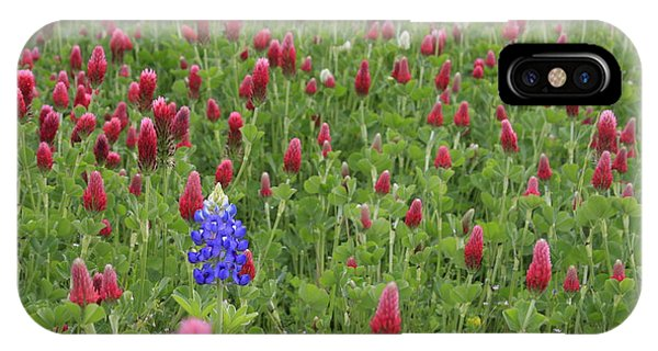 Lonely Bluebonnet IPhone Case