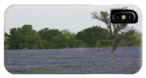 Lonely Tree In Bluebonnets IPhone Case