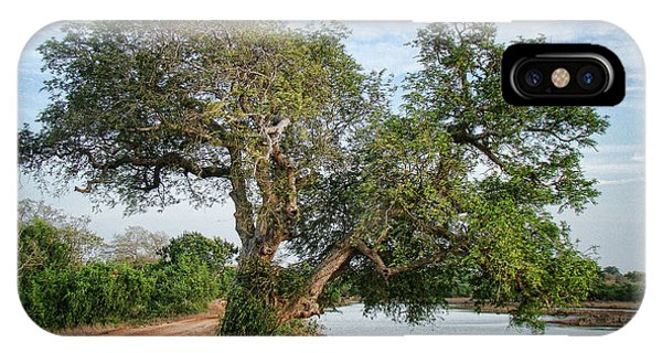 Lonely Tree Phone Case by Sanjeewa Marasinghe