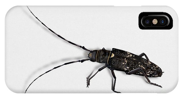 Long-hornded Wood Boring Beetle Monochamus Sartor - Coleoptere Monochame Tailleur - IPhone Case