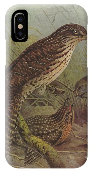 Cuckoo iPhone Case - Long Tailed Cuckoo And Grey Warbler by Dreyer Wildlife Print Collections