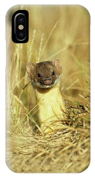 Long-tailed Weasel (mustela Frenata Phone Case by Richard and Susan Day