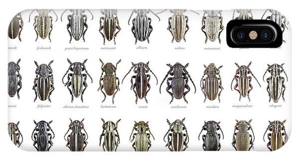 Longhorn Beetles IPhone Case