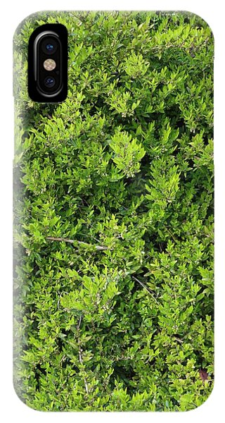Deciduous iPhone Case - Lonicera Pileata by Geoff Kidd/science Photo Library