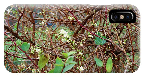 Lonicera X Purpusii Winter Beauty. Phone Case by Adrian Thomas/science Photo Library
