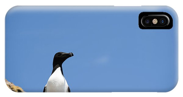 Razorbill iPhone Case - Look At Me by Anne Gilbert