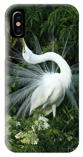 Egrets iPhone Case - Look At Me by Sabrina L Ryan