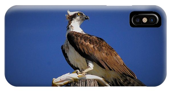 Ospreys iPhone Case - Look Both Ways by Quinn Sedam