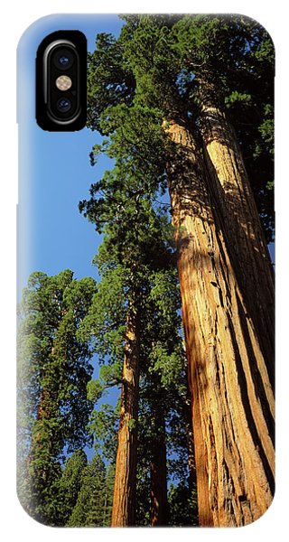 Kings Canyon iPhone Case - Looking Up A Giant Sequoia Tree by Greg Probst