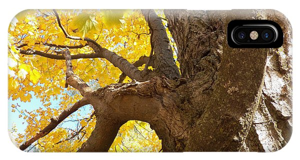 Looking Up The Maple Tree IPhone Case
