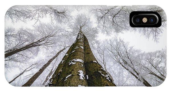 Snowy iPhone Case - Looking Up by Tom Pavlasek