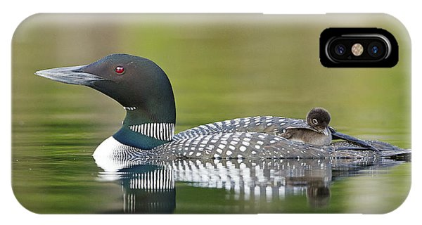 Loon Chick With Parent - Quiet Time IPhone Case