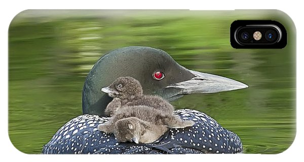 Loon Chicks -  Nap Time IPhone Case