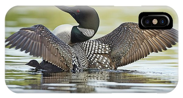 Loon Wing Spread With Chick IPhone Case