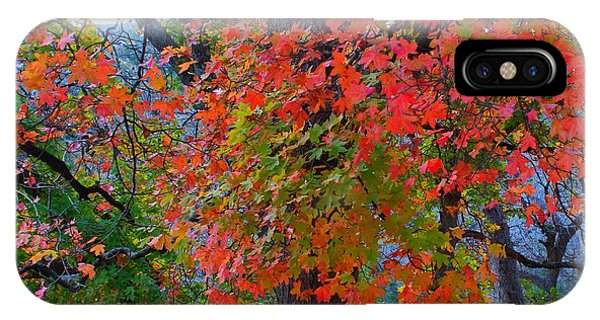 Lost Maples Fall Foliage IPhone Case