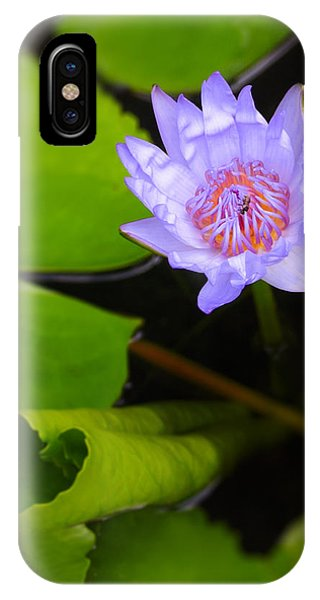 Aquatic Plants iPhone Case - Lotus Flower And Lily Pad by Adam Romanowicz