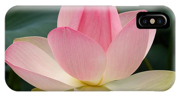 Lotus In Bloom IPhone Case