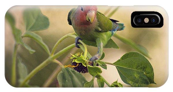 Lovebird On  Sunflower Branch  IPhone Case