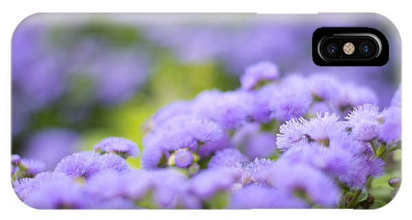 Lovely Blue Mink With Lavender Tones In Soft Focus IPhone Case