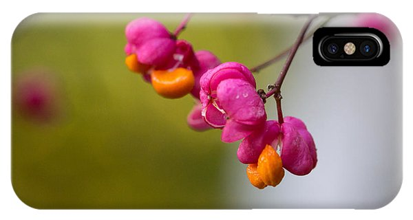 Lovely Colors - European Spindle Flower Seeds IPhone Case