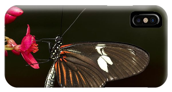 Lovely Longwing IPhone Case