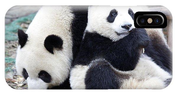 Lovely Pandas IPhone Case
