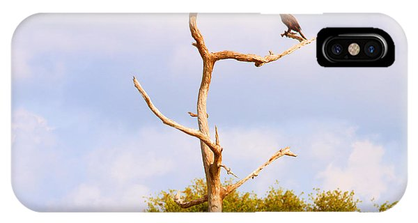 Boynton iPhone Case - Low Angle View Of A Cormorant by Panoramic Images