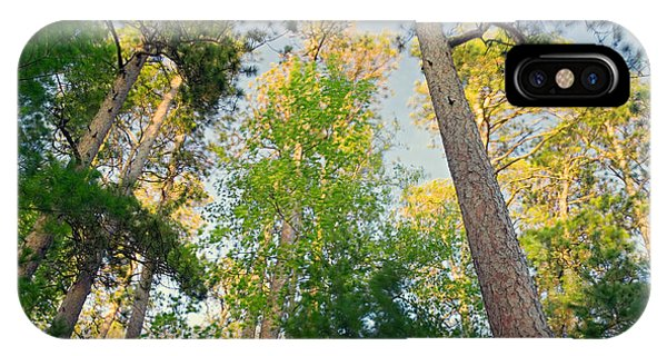Imposing iPhone Case - Low Angle View Of Red Pine Trees by Panoramic Images