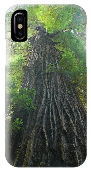 Imposing iPhone Case - Low-angle View Of Redwood Tree by Panoramic Images