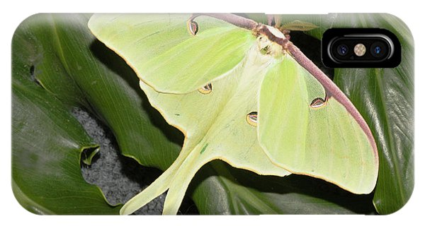 Leave iPhone Case - Luna Moth (actias Luna by Piperanne Worcester
