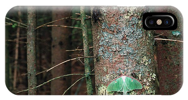 Pterygota iPhone Case - Luna Moth by Art Wolfe