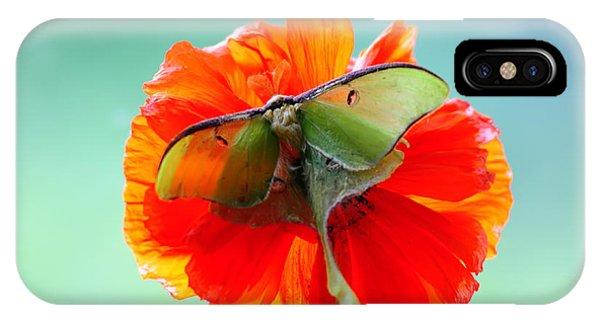 Luna Moth On Poppy Aqua Back Ground IPhone Case
