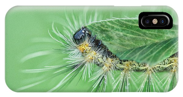 Caterpillar iPhone Case - Lunch Is On Me by Susan Capuano