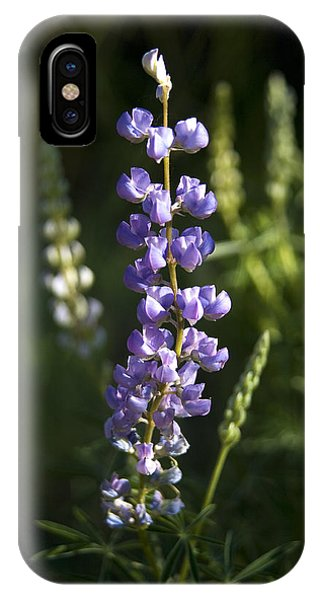 Lupine Echoes IPhone Case