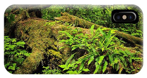 Spruce iPhone Case - Lush Temperate Rainforest by Elena Elisseeva