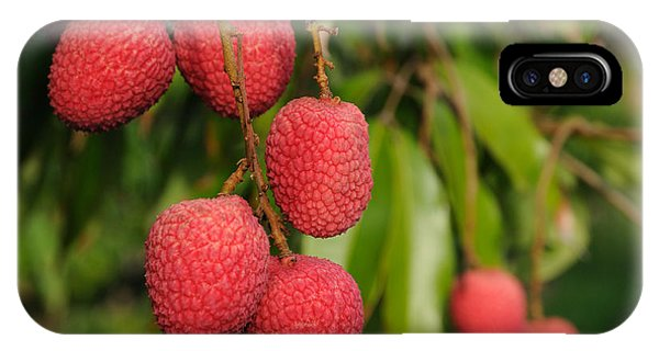 Lychee Fruit On Tree IPhone Case