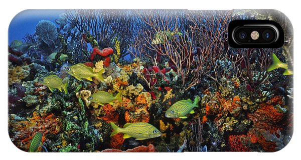 Lynns Reef On A Perfect Day IPhone Case