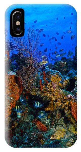 Lynns Reef IPhone Case