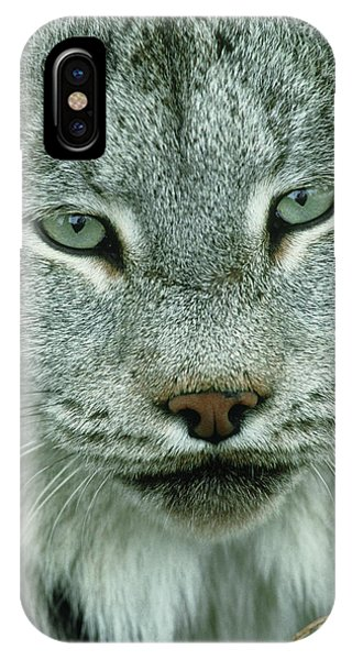 Lynx iPhone Case - Lynx by William Ervin/science Photo Library